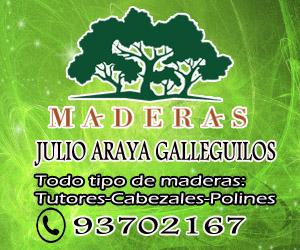 JULIO ARAYA MADERA
