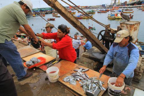 Pescadores de la región podrán acceder a internet gratuito