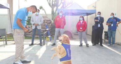 Menores de residencias familiares participan en actividades y terapias asistidas por animales
